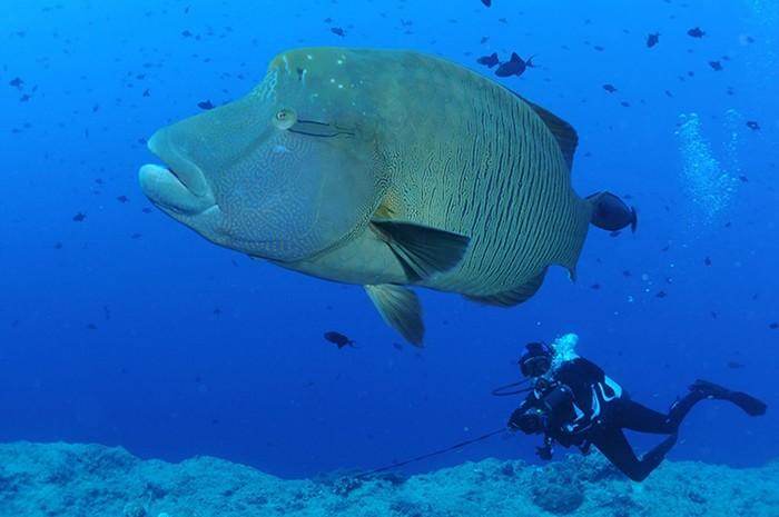 Египетская сила! Что творится под водами Красного моря