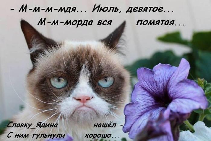 Котоматрица - 3 - Страница 40 149547797_RRS14
