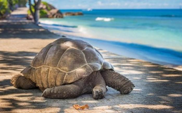10 самых ленивых животных