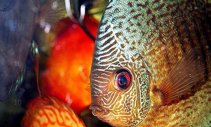 Удивительные и интересные рыбы океанов и морей