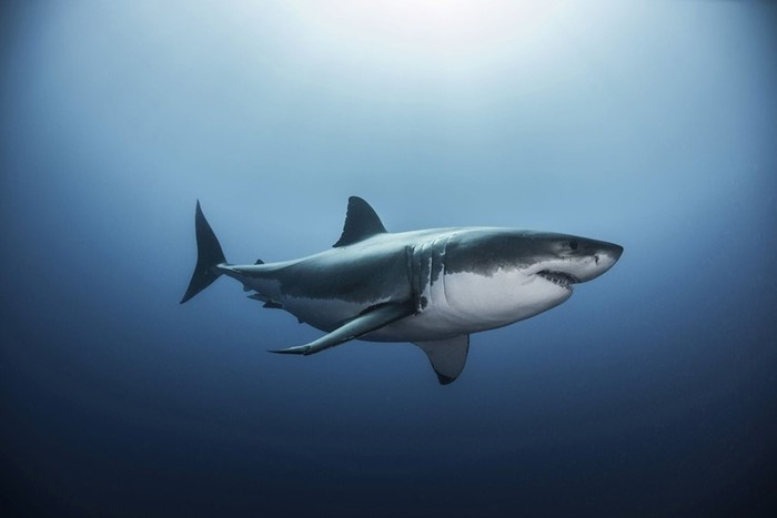 Почему акулам не нравятся воды Черного моря