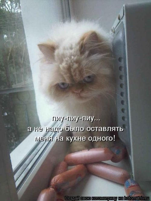 https://img1.liveinternet.ru/images/attach/d/2/149/901/149901029_1565966068_kotomatricy25.jpg