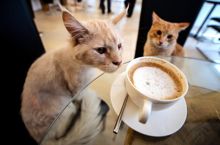 catcafe (700x463, 293Kb)