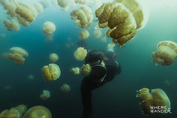 Фотограф поплавал в окружении миллионов медуз и остался доволен