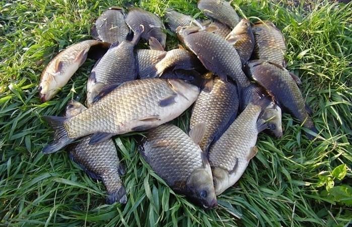 Егерский способ наловить рыбы без снастей