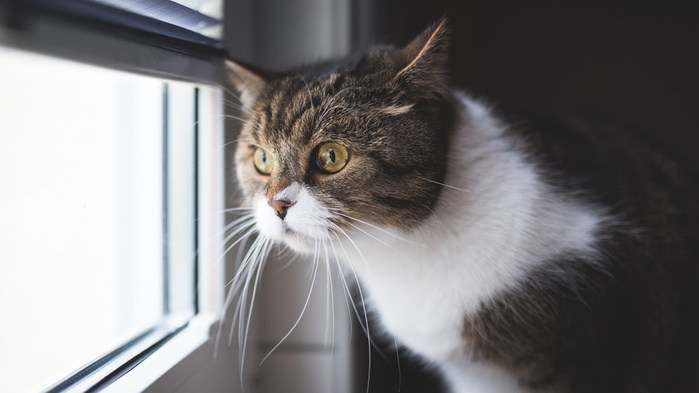 Котоматрица - 4 - Страница 7 150203843_Cats_Window_Glance_Whiskers_517718_3840x2160