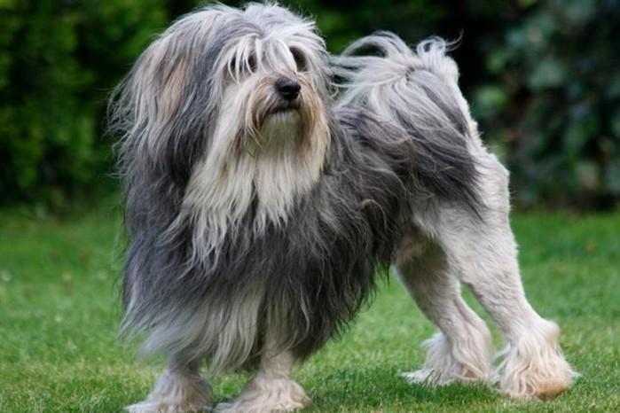10 необычных пород собак, окоторых вы ничего неслышали