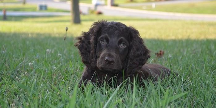 10 необычных пород собак, о которых вы ничего не слышали