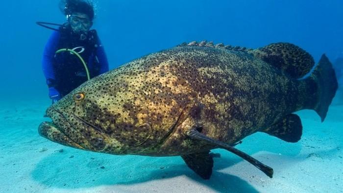 10 малоизвестных рыб убийц