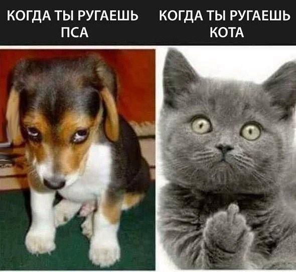 https://img1.liveinternet.ru/images/attach/d/2/150/274/150274207_3416556_150274205_3416556_i_1_.jpg
