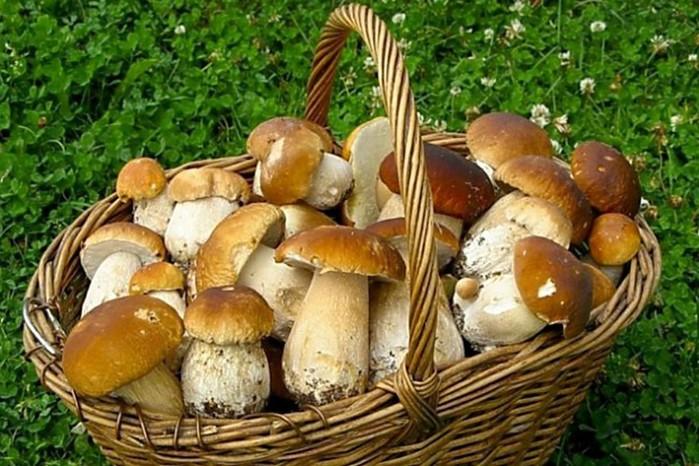 Как правильно собирать грибы
