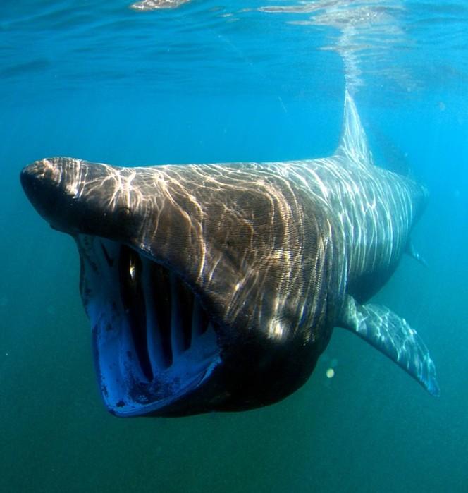 7 наводящих ужас животных, которых не стоит опасаться