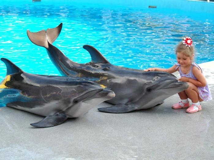 Девочка стала жертвой дельфинов в Кануне