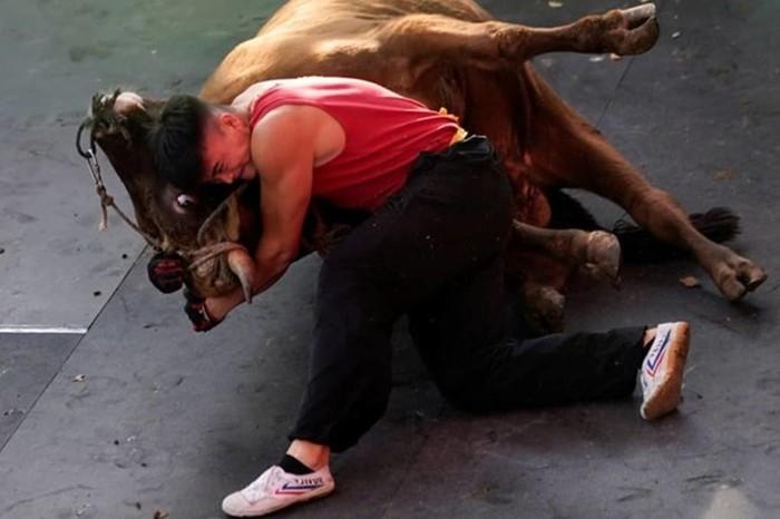 Как мастер боевых искусств сражается с быком