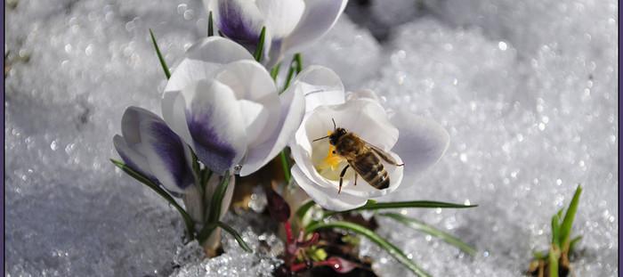 В моей зиме живет весна