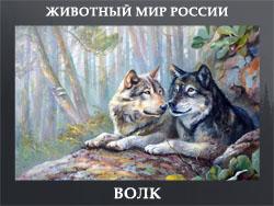 5107871_VOLK (250x188, 54Kb)