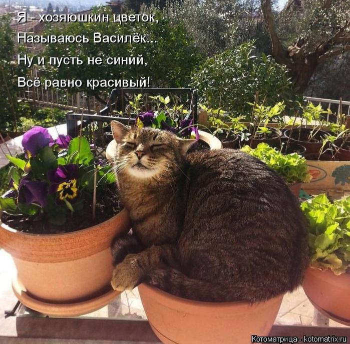 Котоматрица - 4 - Страница 26 152353763_2714816_kotomatritsa_SJ