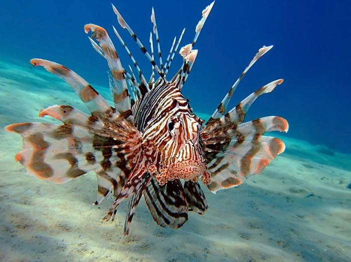Самые опасные морские животные