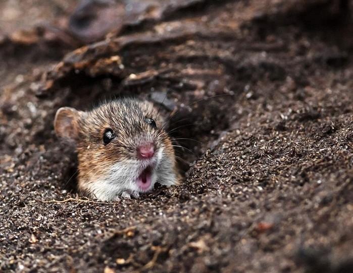 Удивлённые животные, которые в шоке от происходящего вокруг