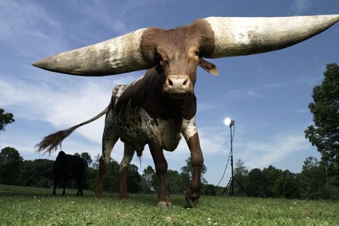 Неожиданные истинные размеры вещей и животных