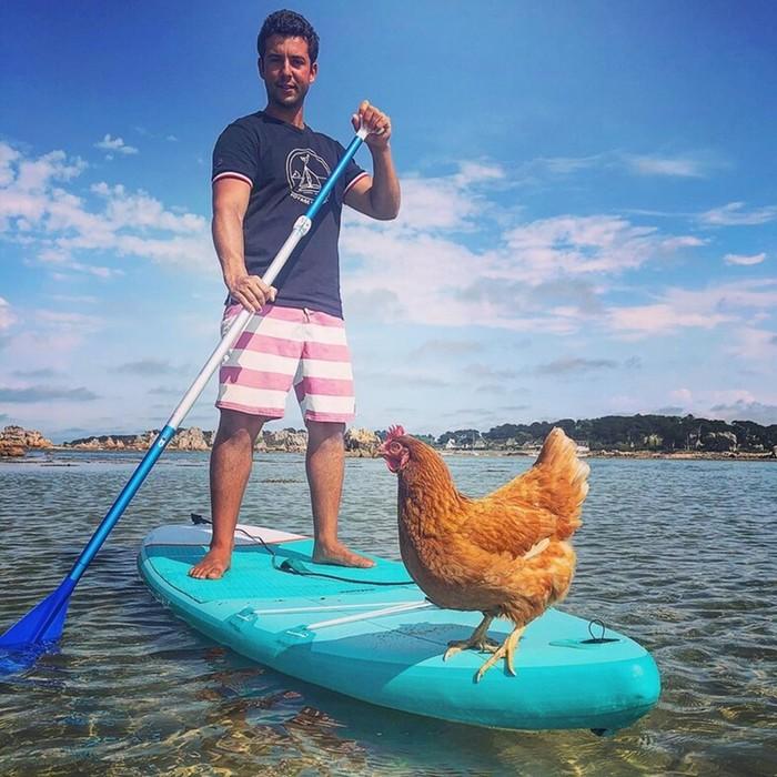 Парень путешествует вокруг мира со своей курицей