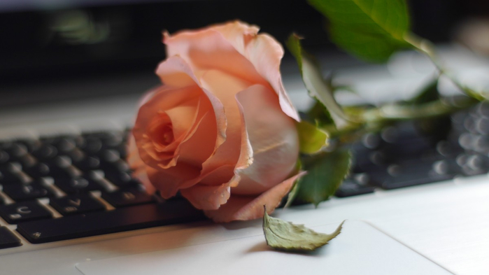 rose_keyboard_still_life_defoliation_computer-394858.jpg!d (700x393, 182Kb)