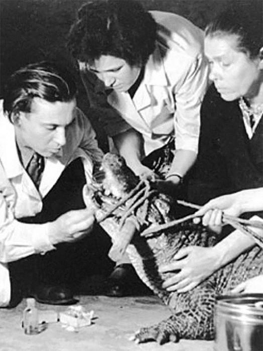 Умер легендарный аллигатор долгожитель Сатурн из Московского зоопарка