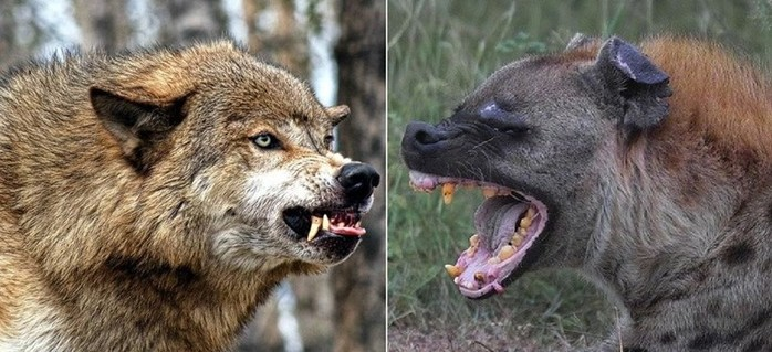Встречи с какими животными смертельно опасны для человека