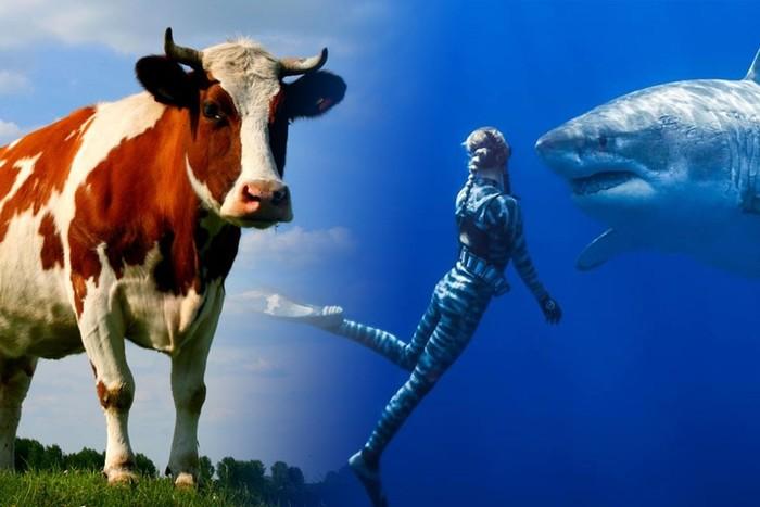 Самые удивительные факты о животных