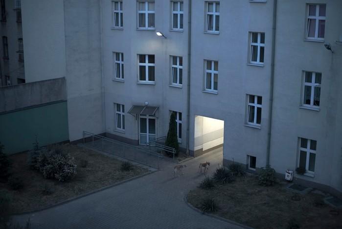 Эмоциональная тишина в фотографиях Вероники Издебской