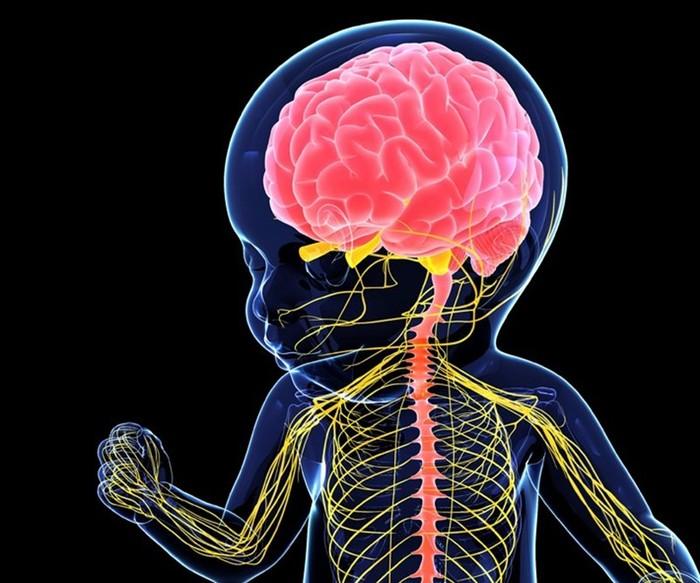 Интересные факты о нервной системе