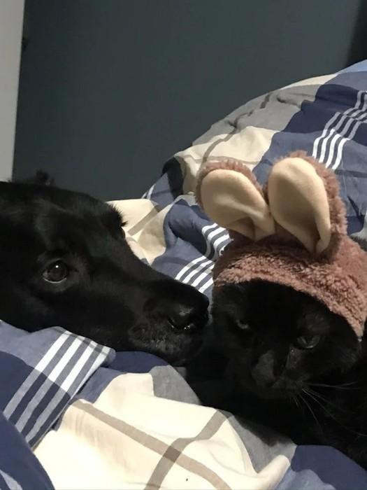 Необычная дружба между животными разных видов