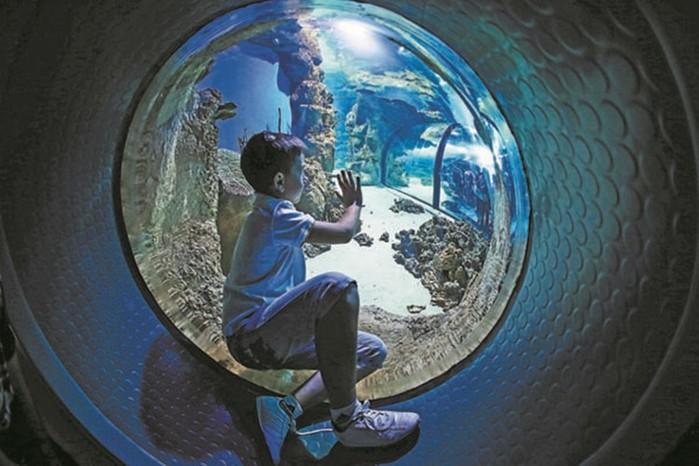 Самые большие аквариумы Москвы