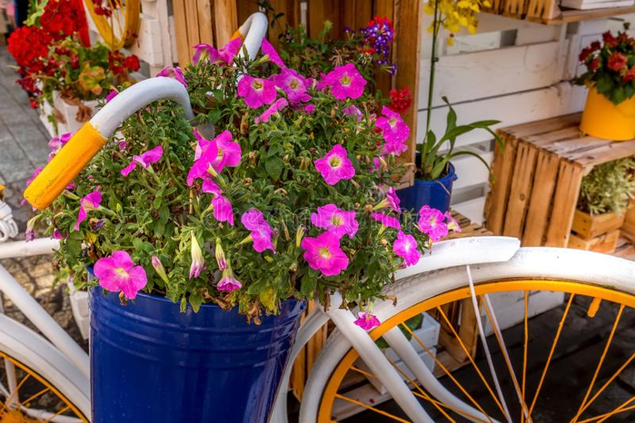 wroclaw-poland-old-town-rynek-market-square-colorful-bicycle-flowers-decorations-wroclaw-poland-rynek-market-square-153745011 (700x466, 454Kb)