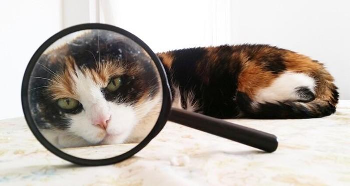 Зачем кошке усы? 20 фактов