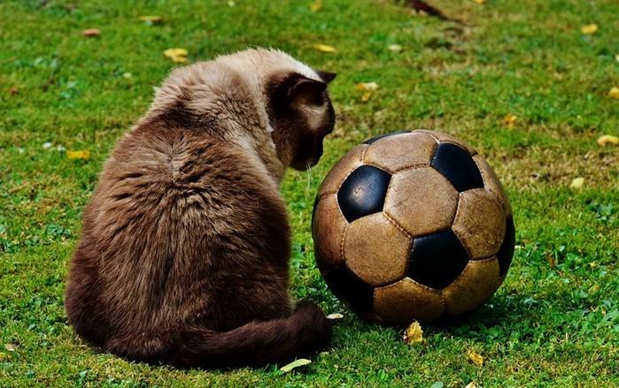 Футбольные курьёзы в журнале «Наука и жизнь»