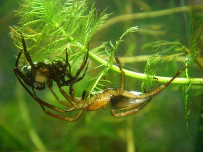 10 необычных способностей пауков