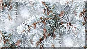 depositphotos_57292467-stock-photo-winter-background-a-coniferous-tree (300x169, 16Kb)