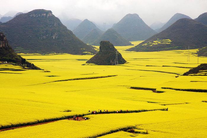 Цветочные-Поля-Канола-Графство-Луопинсянь-Китай (700x466, 97Kb)