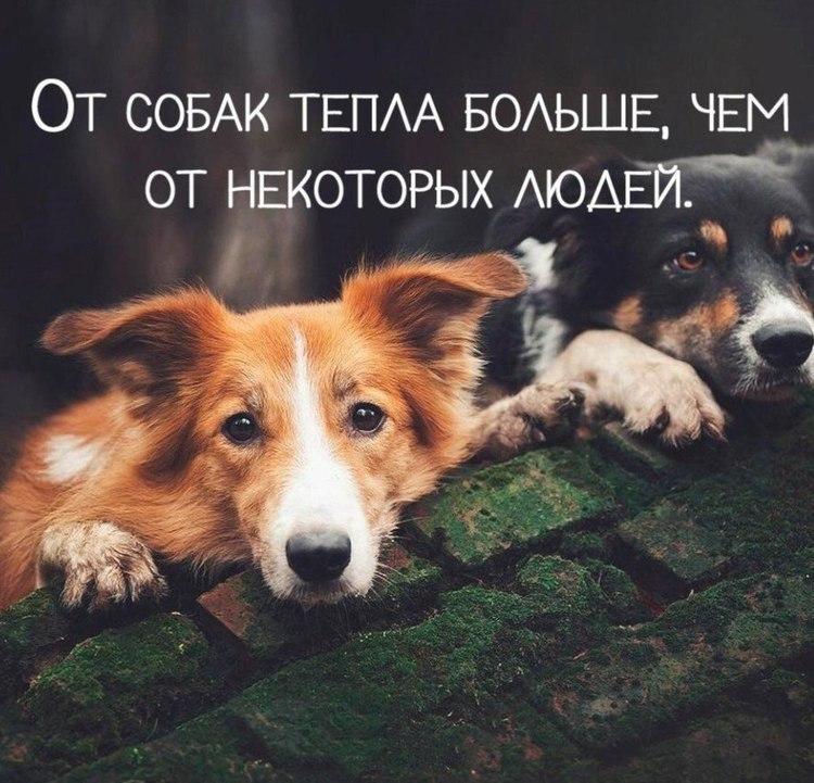 блюда картинки про собак с фразами найдете рецепты выпечки