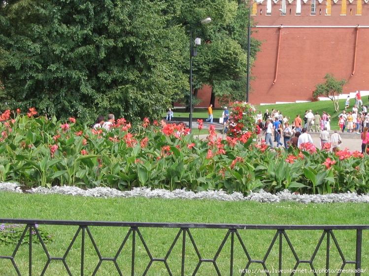 Александровский сад цветы оптом