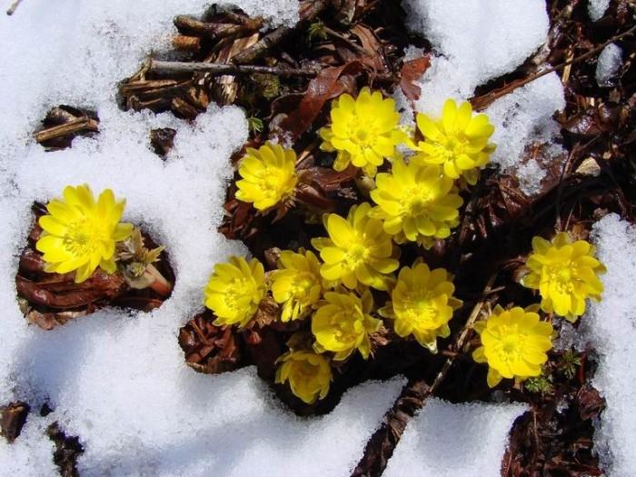 сахалинская весна фото рис