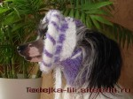 модельки вязанной одежды для собачек.  Размещено с помощью приложения...