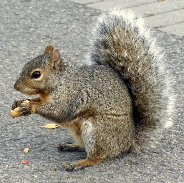 мы любим орехи мы белки с хвостами мы скачем по клубам и схема простая...