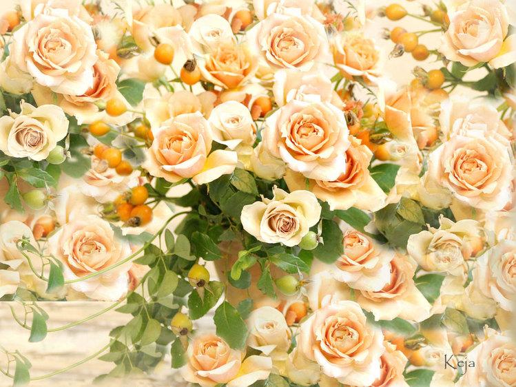 (1024х768, 206 Kb) Карамельные розы - фото обои и картинки, обои цветы.