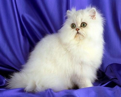 Re: Все о котах и кошечках.