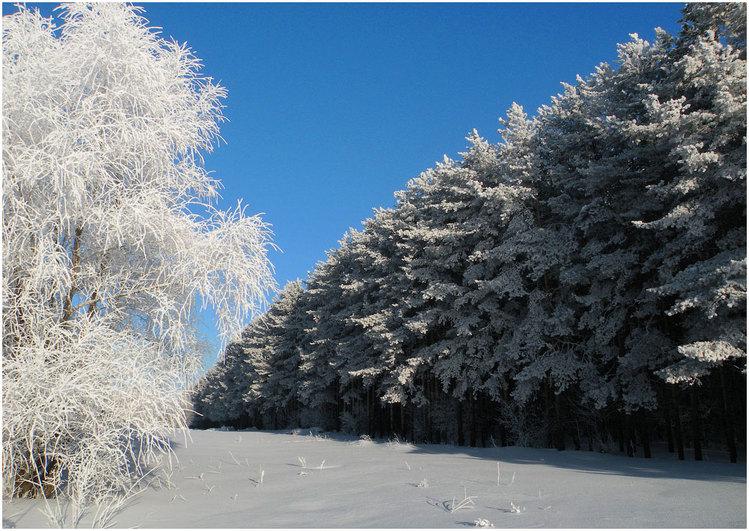 Чародейкою зимой картинка