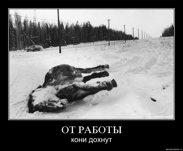 Яндекса, картинки от работы кони дохнут прикол