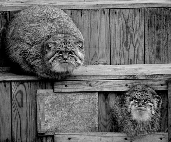 Позитив от животных )