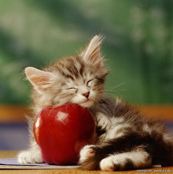 год выздоравливай кошка картинки сегодняшнее
